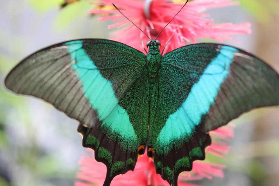 vlindertuin palermo