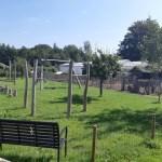 { Uittip } | Met kinderen naar tuinderij De Bundertjes in Helmond