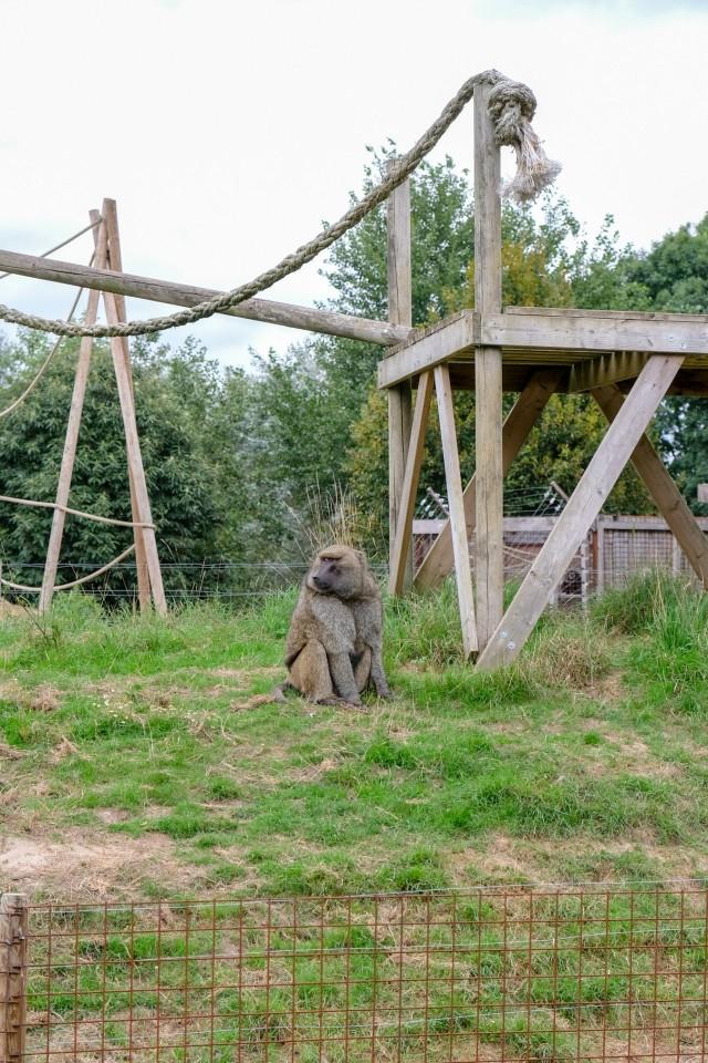 Diervriendelijke dierentuinen:Dierenpark De Zonnegloed