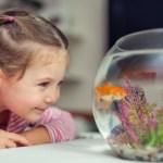 Huisdieren en kinderen: Go or No Go?