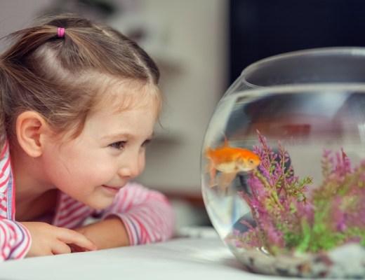 huisdieren en kinderen waarom wel of niet