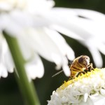Insecten: De veroorzaker van mijn haat-liefde verhouding met de zomer