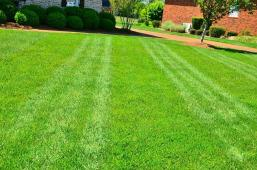 lawn-care-lawn-maintenance-lawn-services-grass-cutting