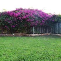 Dioni-grass-flowers (Custom)