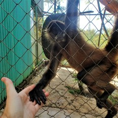 Justin holding hands with a spider monkey named Sam