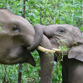 Why spend your holiday living among a bunch of tourists when you can spend it living among the elephants in Thailand!