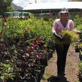 Staff member at an organic tree nursery in Ecuador