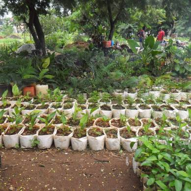 Plants for reforestation in Tanzania