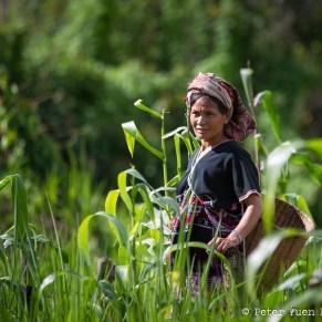 Thai woman foraging