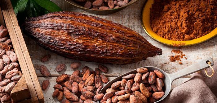 /cms/uploads/image/file/559443/cultivo-cacao.jpg
