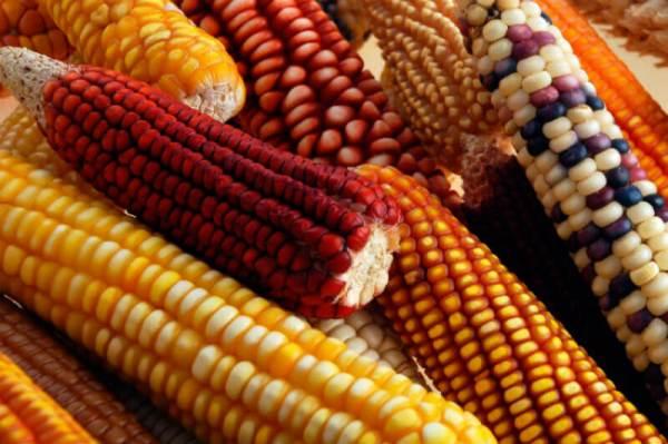 /cms/uploads/image/file/603829/dieta-maiz-frijol-y-amaranto.jpg