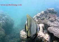 grd poisson Belitung Go Belitung
