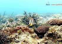 poisson orange Belitung Go Belitung