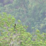 singe Belitung Indonésie Go Belitung
