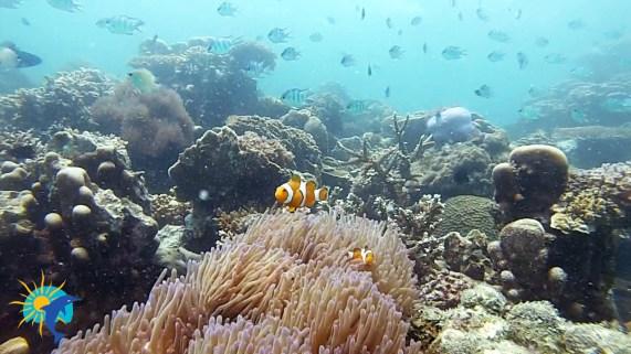 snorkeling à Belitung Indonésie Go Belitung