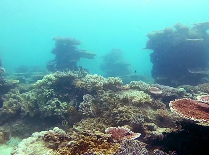 Coraux Lengkuas Belitung Indonesie