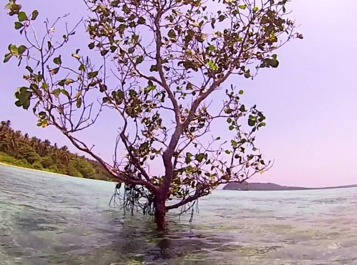 Paletuvier Belitung Indonésie