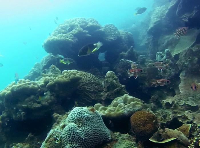 Ikan Selat Nasik Belitung Indonesie