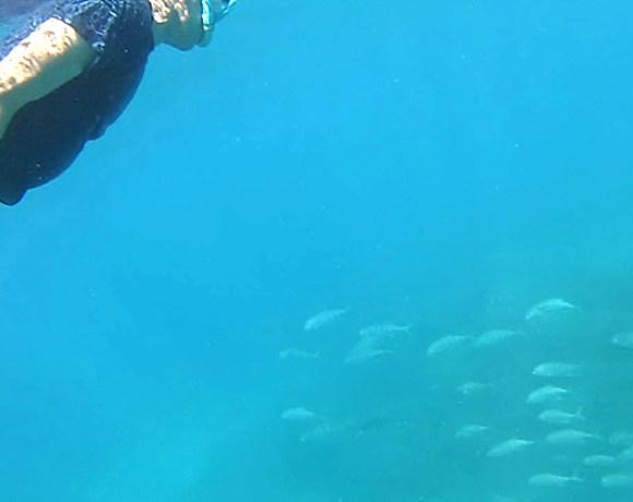 teo et poissons Go Belitung