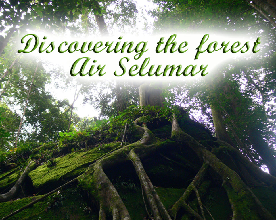 Discovering-the-forest of air Selumar GoBelitung Belitung Indonesia