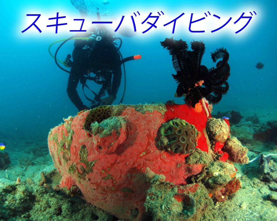 diving jp GoBelitung Belitung Indonesia