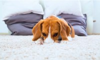 """What Causes """"New Carpet Smell"""" and Is It Harmful ..."""
