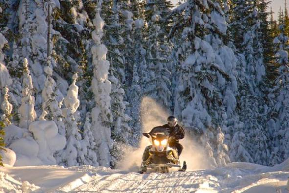 Image result for bear valley snowmobile