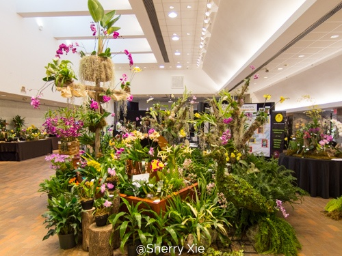 Toronto Orchid Show 2018