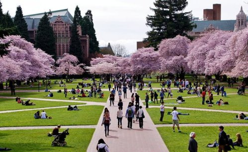 The University of Washington