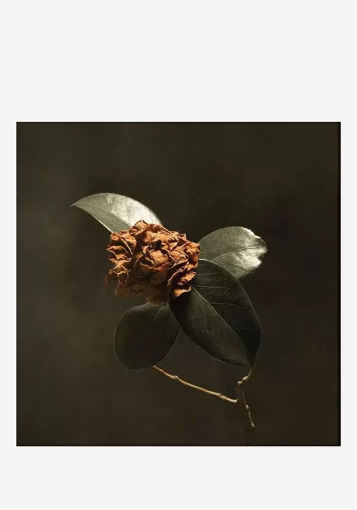 St. Paul And The Broken Bones – Young Sick Camellia (RECORDS, LLC)
