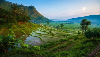 Rice fields of the island of Bali at sunrise, Indonesia