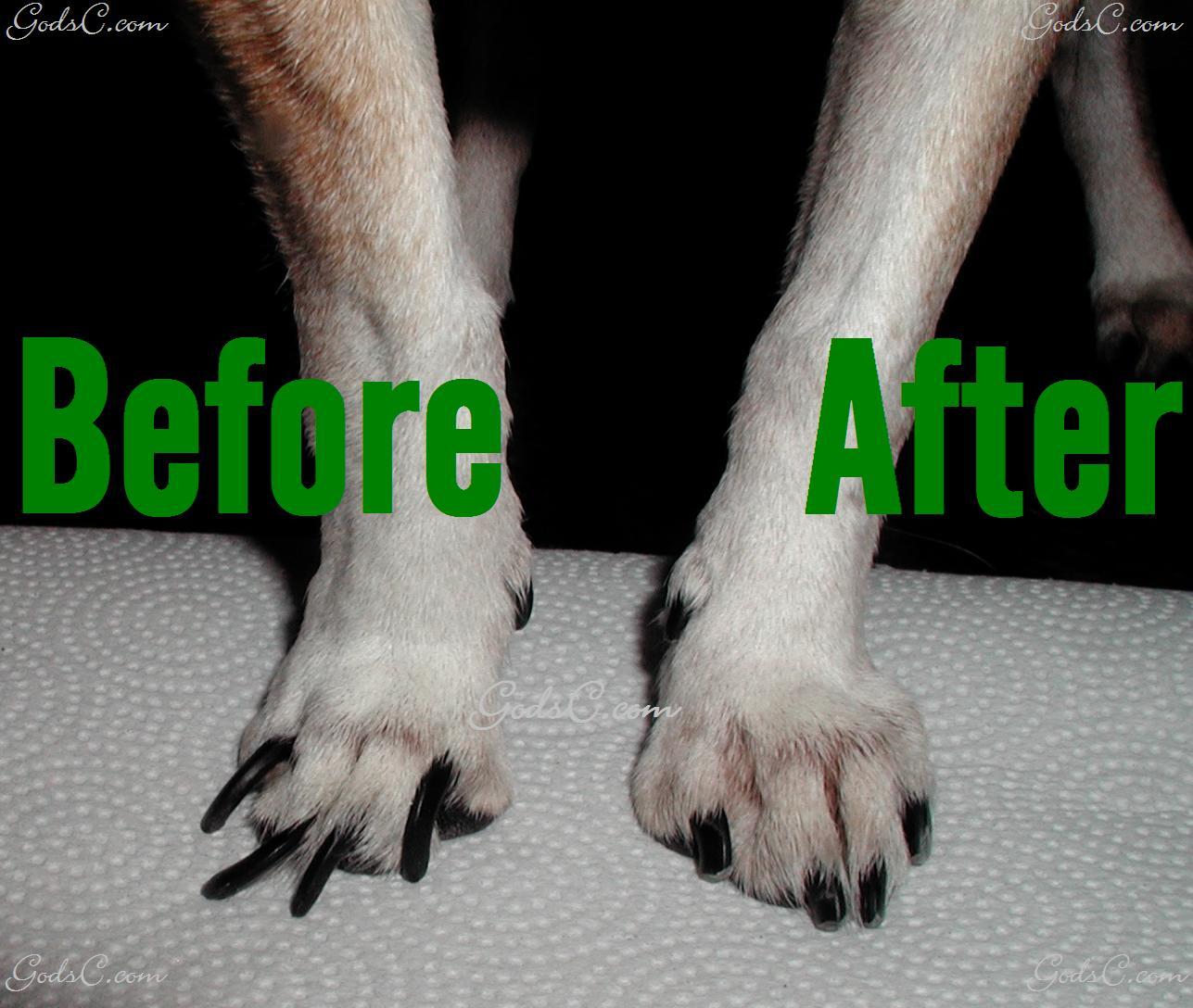 How Short Should I Cut My Dog S Nails