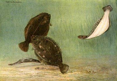 flounders floundering