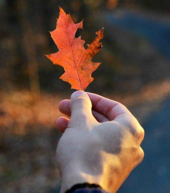Weathering the Seasons
