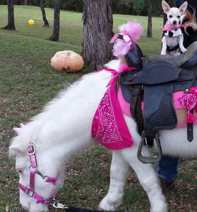 birthday parties god s little critters petting zoo pony party corporate and church events beautiful ponies loving barnyard pets