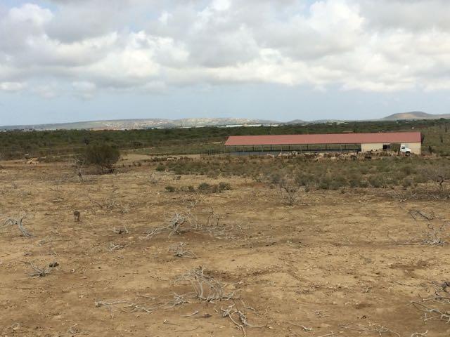 donkey serengeti
