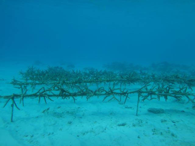 Bonaire coral