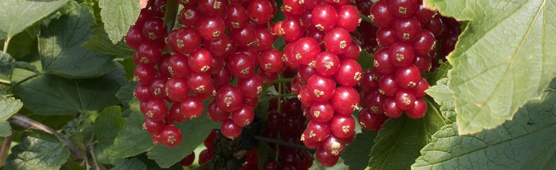 Fruitteelt - Goesten en Opdam - Financieel adviseurs