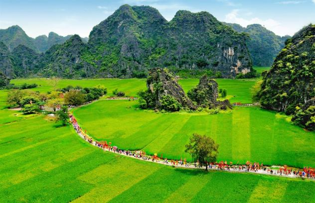 Rice fields in Ninh Binh