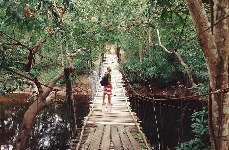 Discover primeval forest in Phu Quoc Island