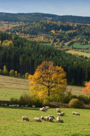 Landscape by Strasin