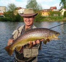 Brown trout from Vltava