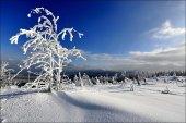 Winter in Pancir mountain