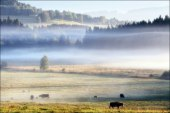 Morning by Zvonkova