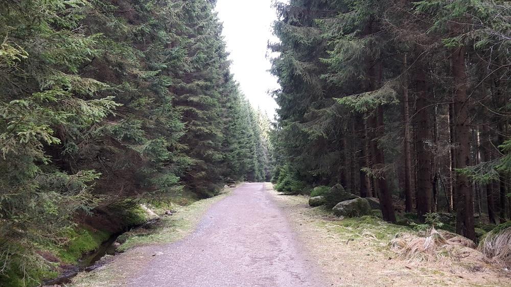 Wanderweg Harz Alte Bobbahn