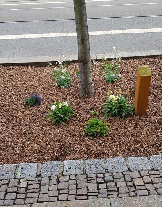 In eigener Sache – Baumscheibenbepflanzung