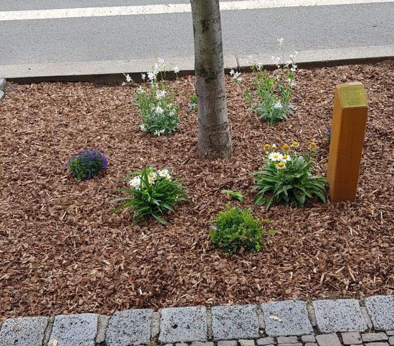 """In eigener Sache – Erinnerung """"Eine Bank für Gohlis"""" / Baumscheibenbepflanzung"""