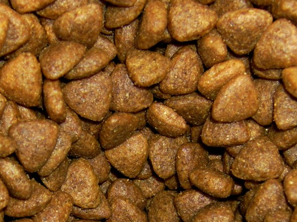 Homemade Dry Cat Food
