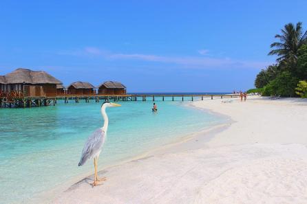 MALDIVY 4