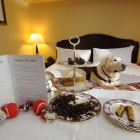 The Top Choices for Pet Friendly Accommodation on the Gold Coast